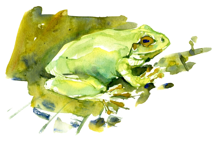 Watercolor of a frog