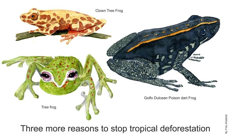 Three rainforest frogs
