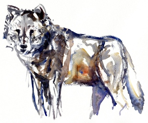 watercolor-wolf-9