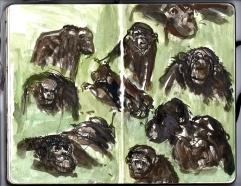 Chimp studies, the Zoo