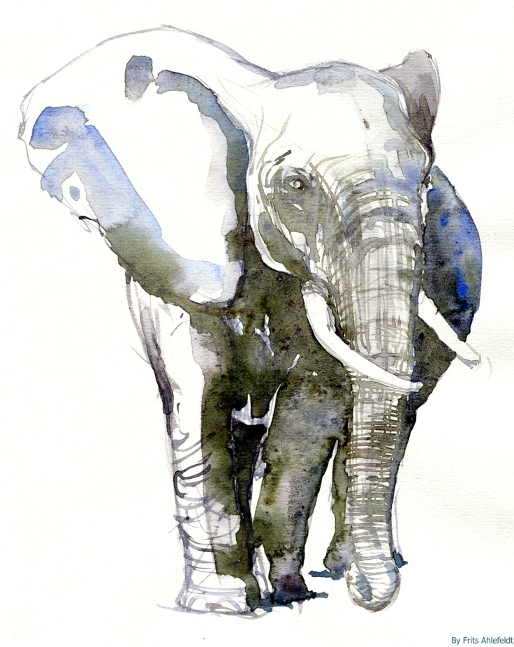 Elephant looking left, watercolor