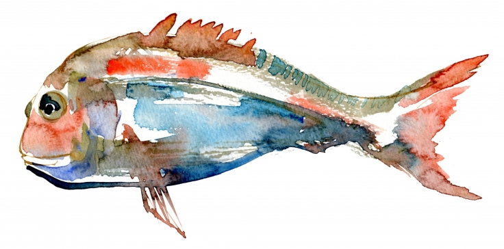 watercolor of a fish