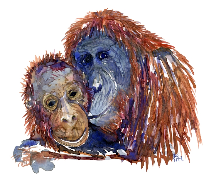 orangutan watercolor illustration by frits ahlefeldt