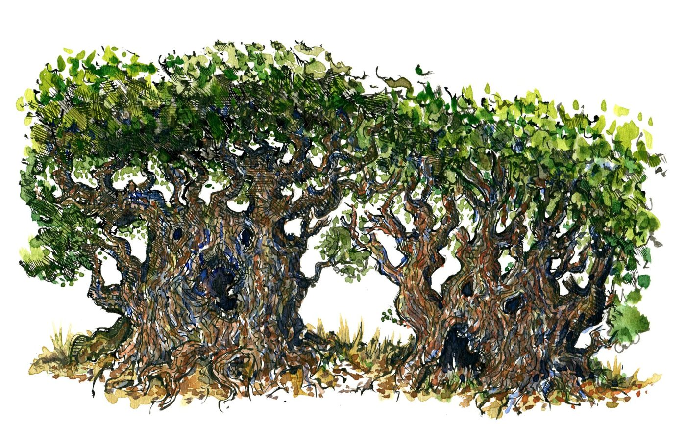 illustration of two trees