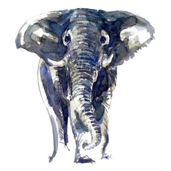 huge elephant front view watercolor by Frits Ahlefeldt