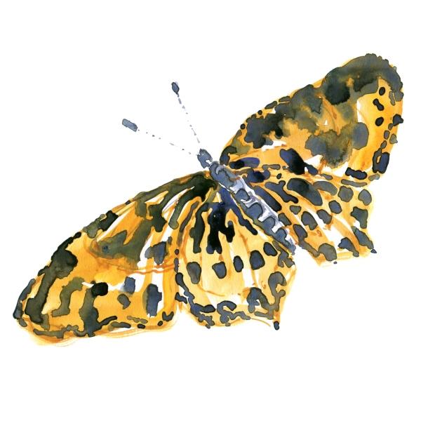 Watercolour - akvarel af Frits Ahlefeldt - sommerfugl
