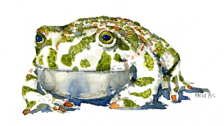 Toad watercolor