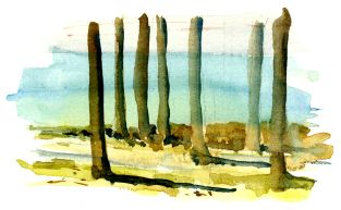 Trees south of Roenne, by the coast. Watercolor. Bornholm. Denmark