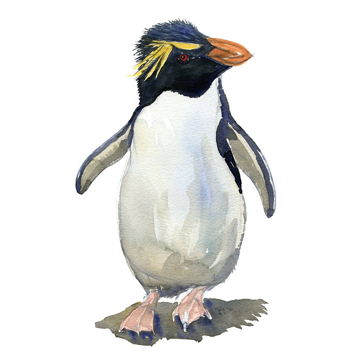 Watercolour sketch of a rockhopper penguin Art by Frits Ahlefeldt