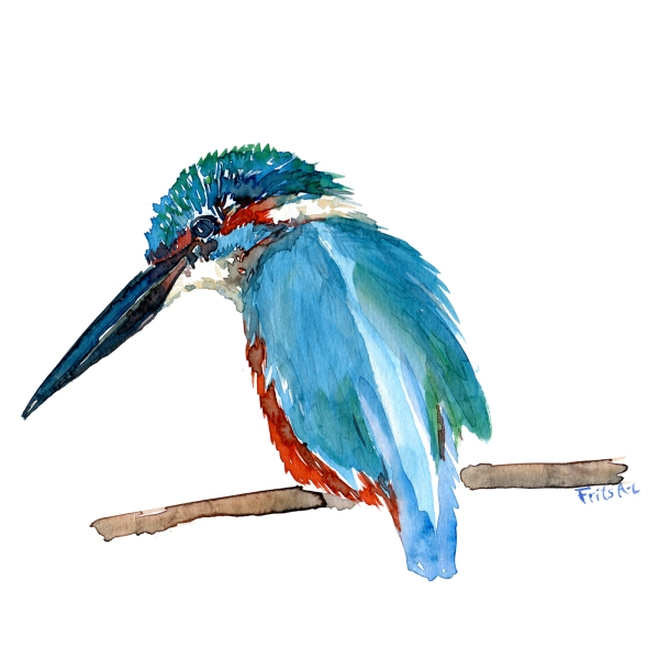 Kingfisher bird watercolour