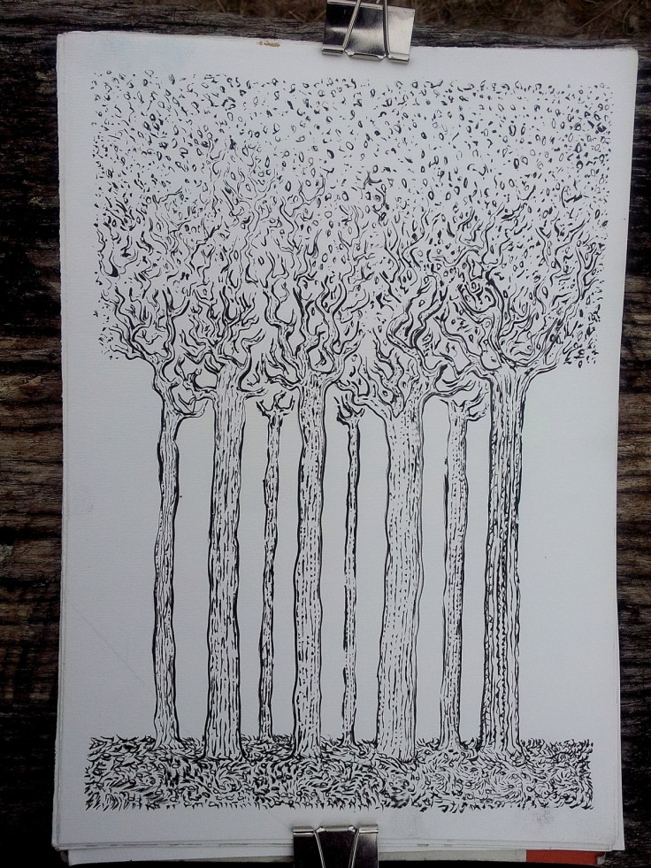 Ink drawing of some tall trees