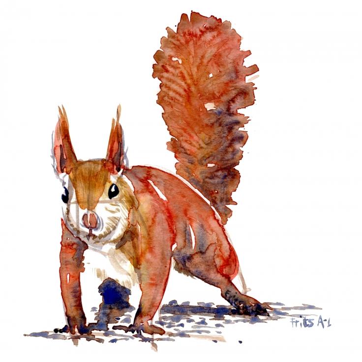 Squirrel watercolor