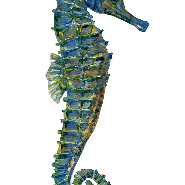 Watercolour of a green seahorse, painting by Frits Ahlefeldt