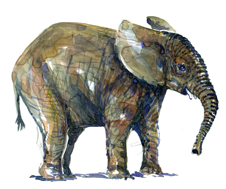 Elephant watercolor by Frits Ahlefeldt