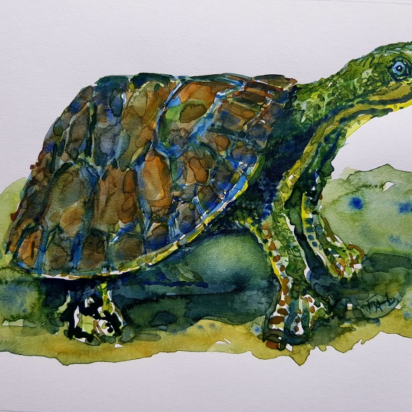 Watercolour of turtle, painting by Frits Ahlefeldt