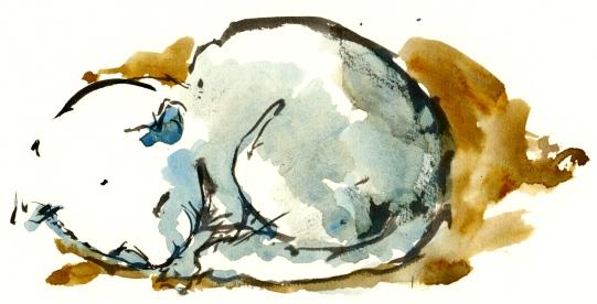 Cat, Bornholm, Denmark. Watercolor
