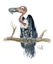 Vulture story character sketch