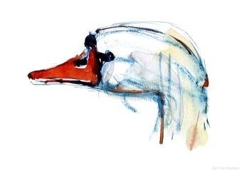 Swan head in watercolor by Frits Ahlefeldt