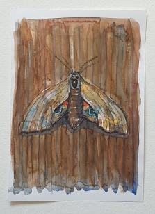 Butterfly on wooden wall