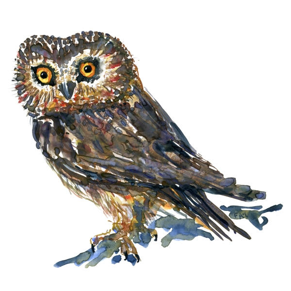 Watercolour by Frits Ahlefeldt of small brown owl, with yellow eyes