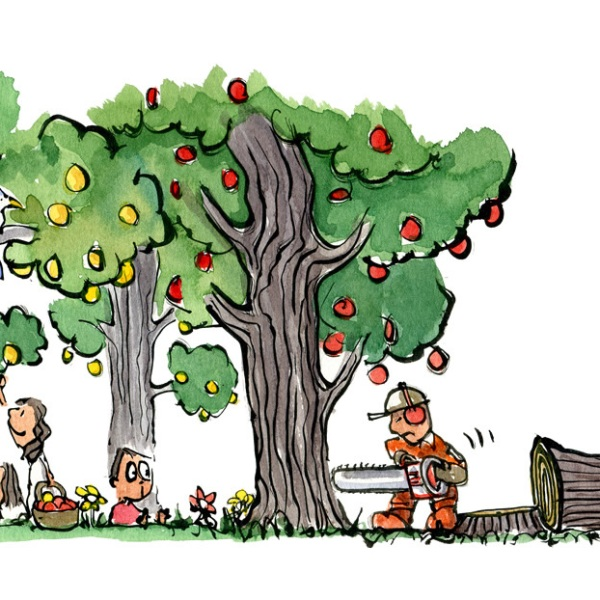 drawing of people picking fruit and a guy cutting down all the trees