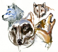 watercolor-wolf-2