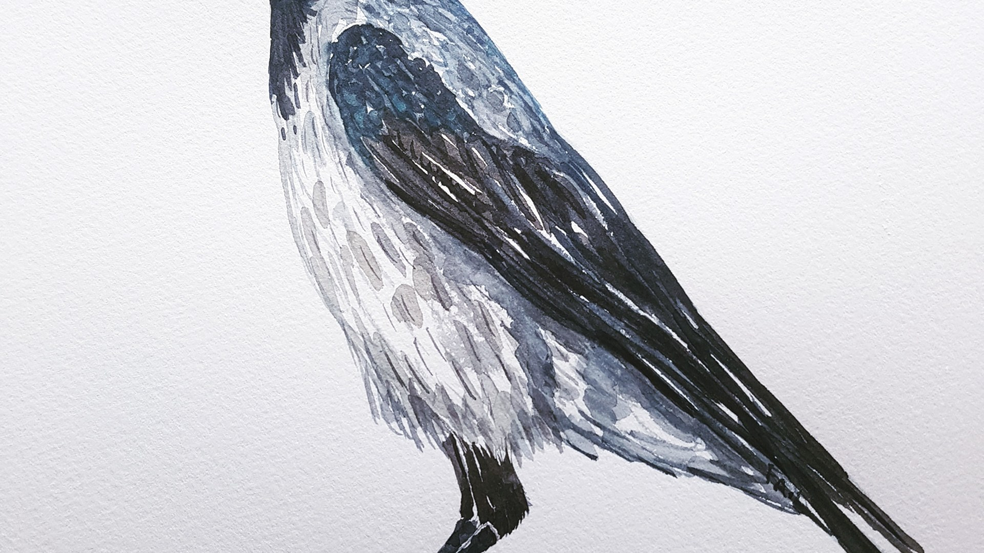 Watercolour painting of Crow. Artwork by Frits Ahlefeldt