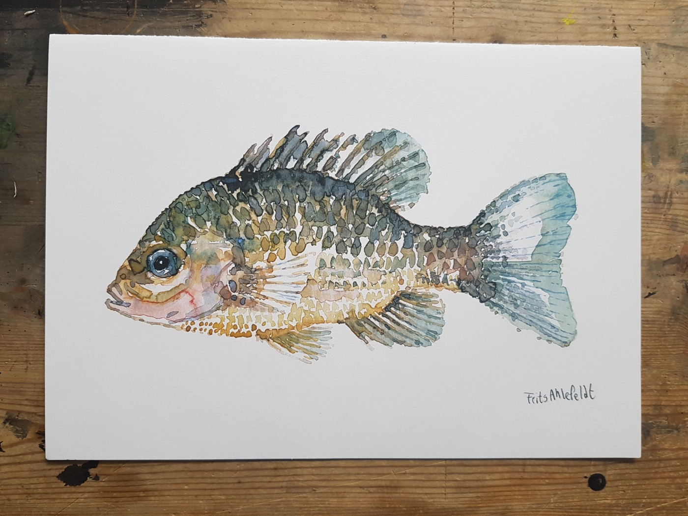 Fish Watercolor artprint by Frits Ahlefeldt