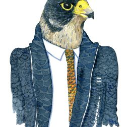 Watercolor of a Peregrine Falcon in a dark suit, painting by Frits Ahlefeldt