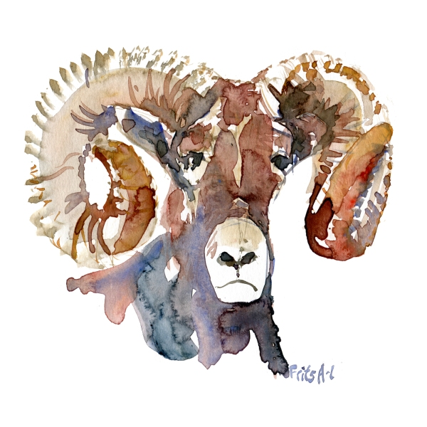 Watercolour of Bighorn sheep, by Frits Ahlefeldt