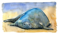 monk seal on beach sketch