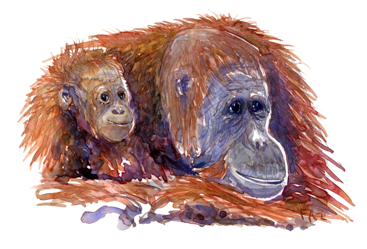 orangutan watercolour by Frits Ahlefeldt