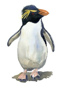 Watercolour sketch of a rockhopper penguin Art by Frits Ahlefeldt