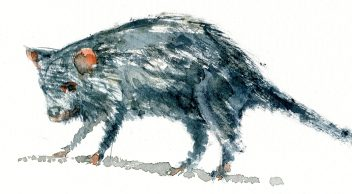 Sketch tasmanian Devil