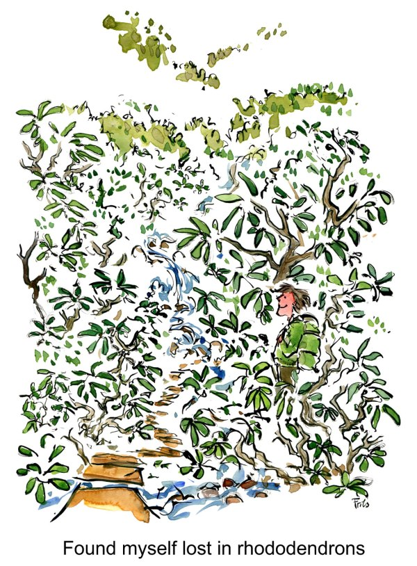 drawing of a man in huge bushes of rhododendrons