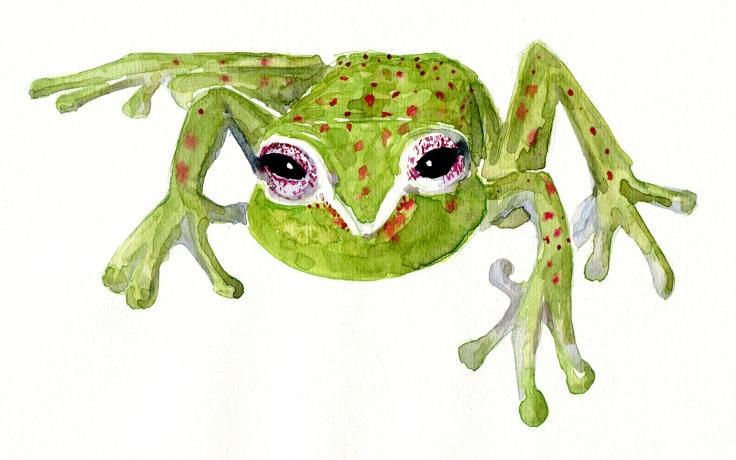 Watercolor tree frog
