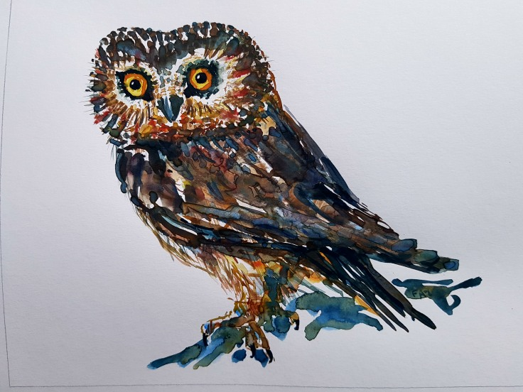 Bird watercolor, small owl, by Frits Ahlefeldt