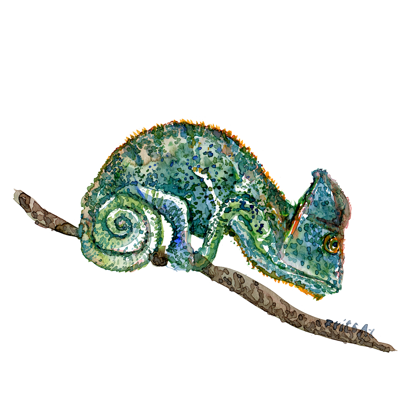 Watercolour sketch of Chameleon sitting on branch, by Frits Ahlefeldt