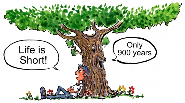 Tree and guy talking about the length of life