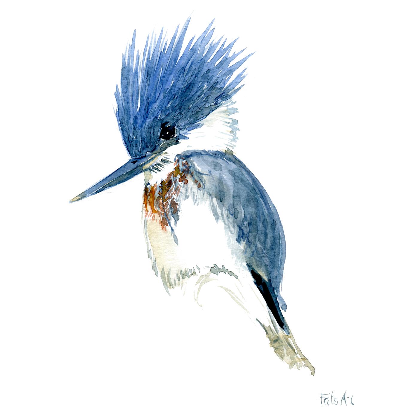 Illustration of Kingfisher by Frits Ahlefeldt