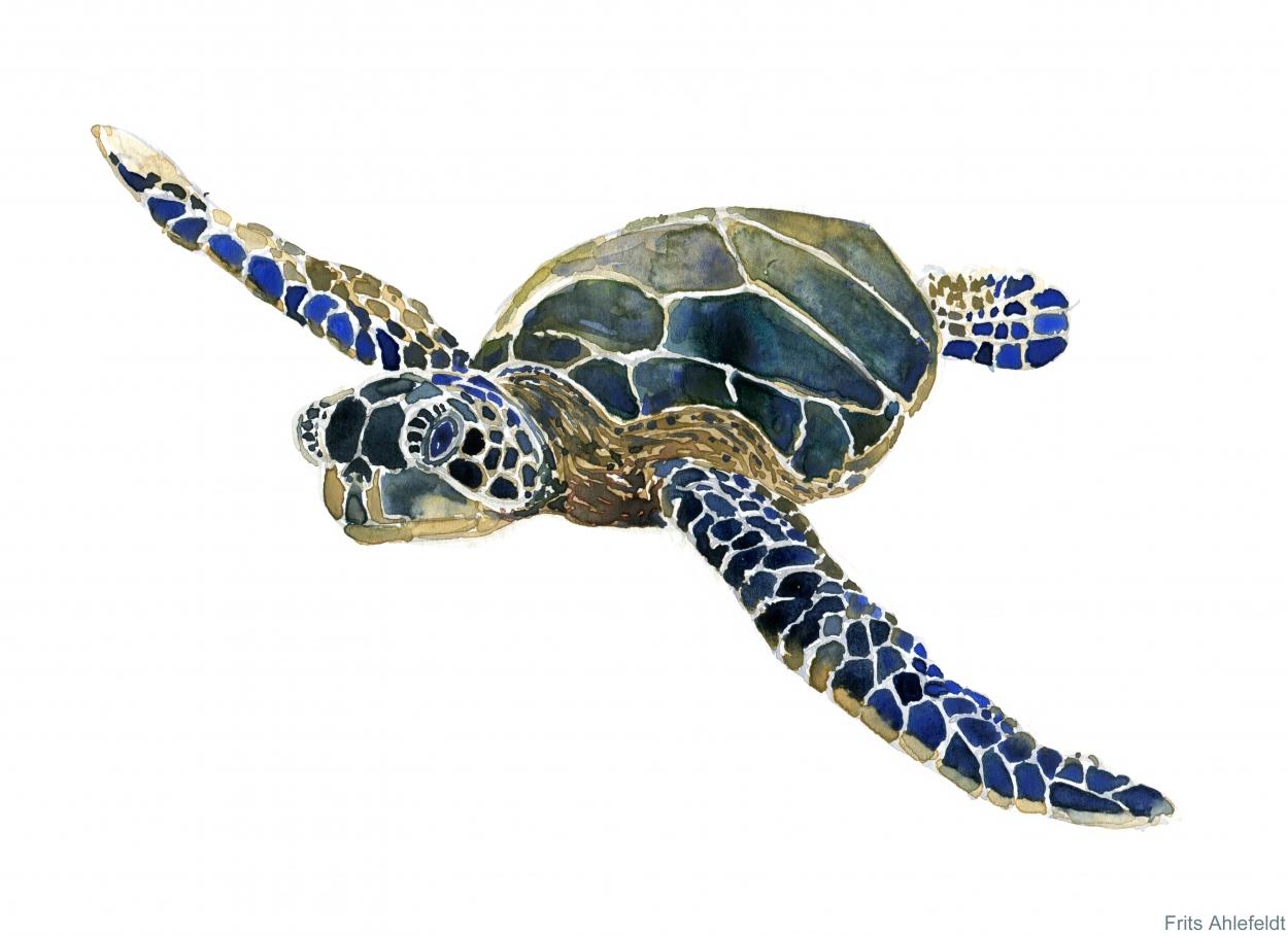 Watercolour of Sea turtle