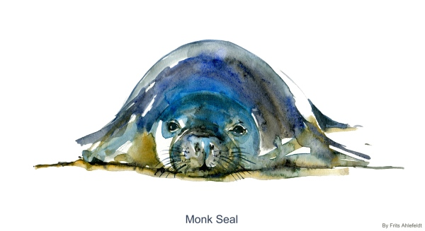 image of Monk Seal