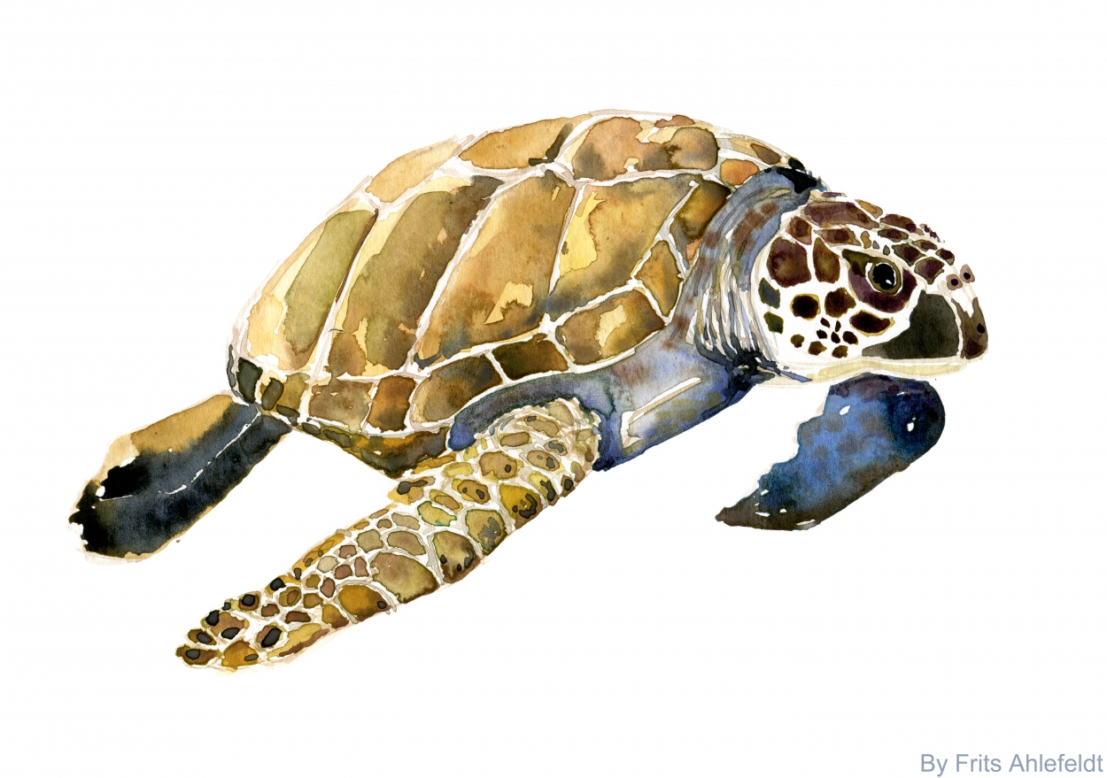Watercolor of Sea Turtle