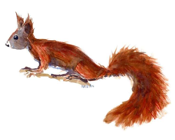 Squirrel watercolor sideview