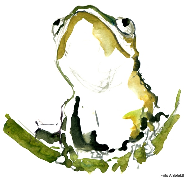 watercolor of a frog looking up