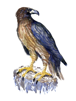 illustration in watercolor of buzzard Painting by Frits Ahlefeldt