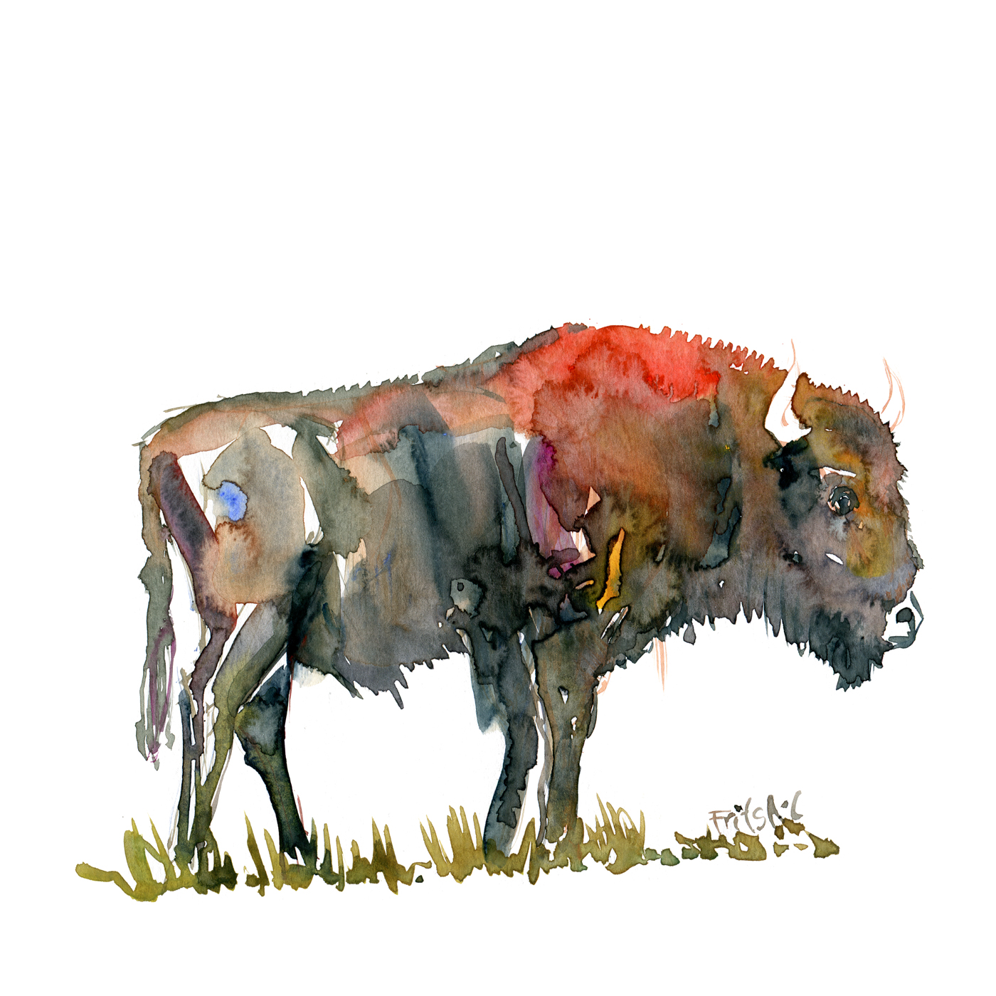 Buffalo watercolor by Frits Ahlefeldt