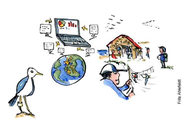 Drawing of bird ringing, bird people, a hiker and some tiny islands called ertholmene. Illustration by Frits Ahlefeldt