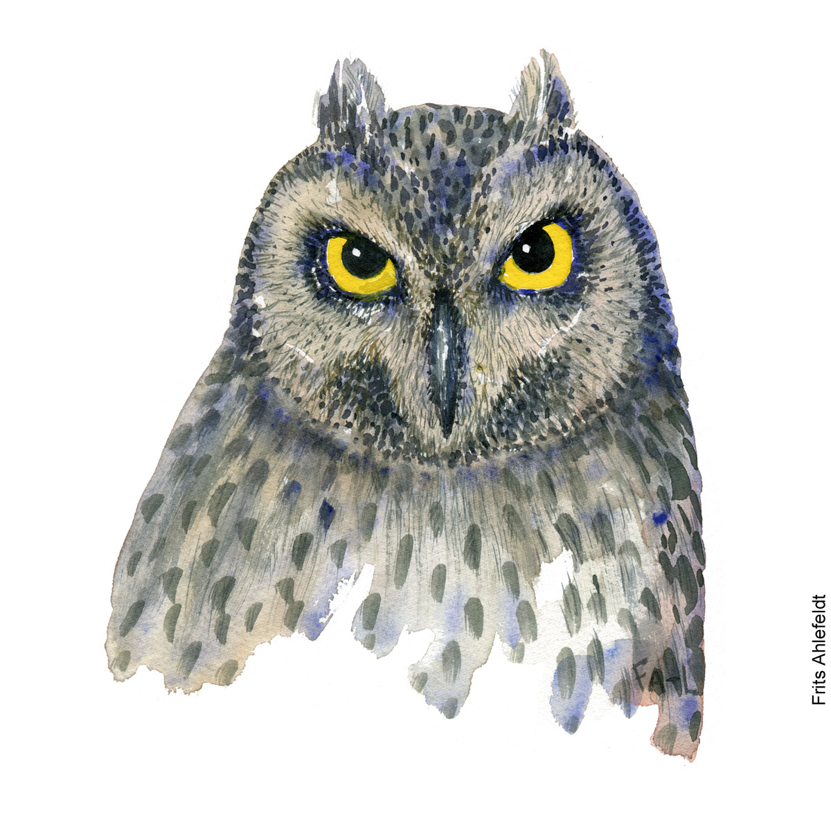 Watercolor of an owl with yellow eyes - Illustration by Frits Ahlefeldt