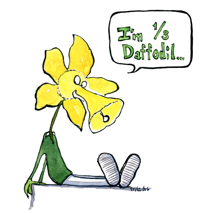 Drawing of a half man half flower saying I'm one third daffodil. Biodiversity illustration by Frits Ahlefeldt